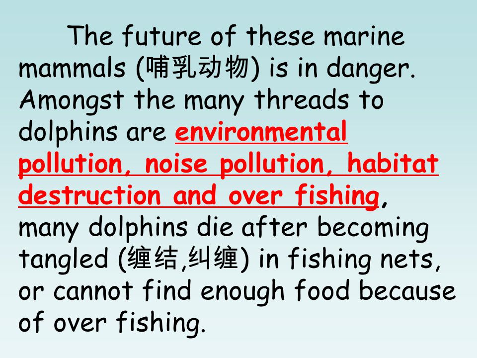 The future of these marine mammals ( 哺乳动物 ) is in danger.