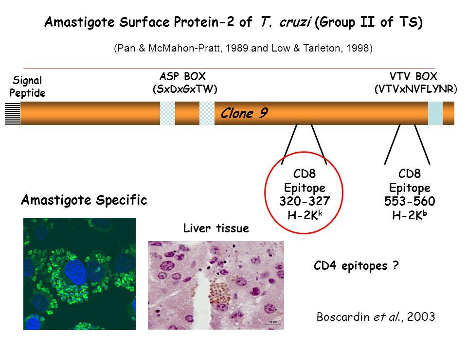 VTV BOX (VTVxNVFLYNR) ASP BOX (SxDxGxTW) Boscardin et al., 2003 Clone 9 Signal Peptide Amastigote Surface Protein-2 of T.