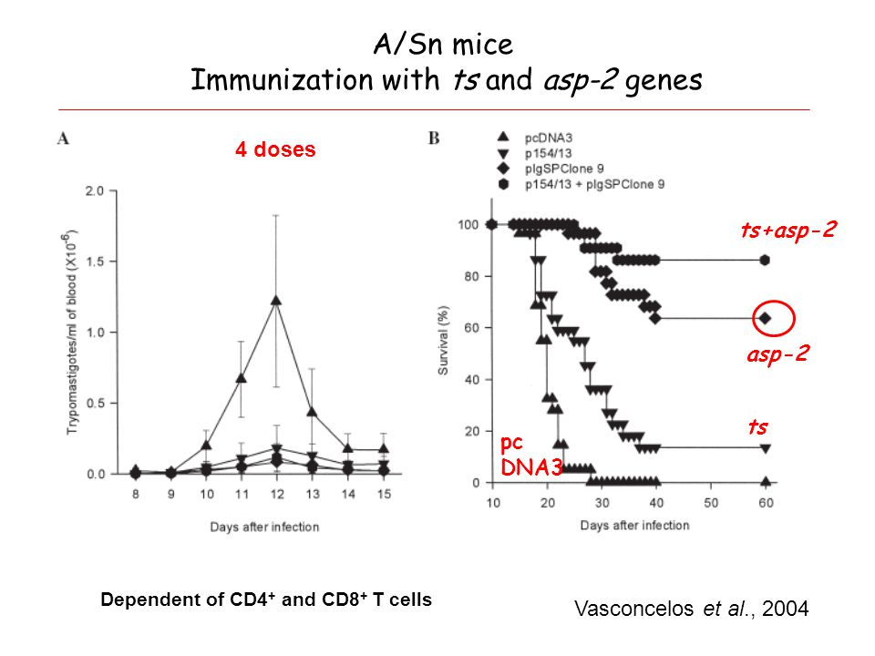 A/Sn mice Immunization with ts and asp-2 genes Vasconcelos et al., 2004 4 doses Dependent of CD4 + and CD8 + T cells asp-2 ts ts+asp-2 pc DNA3