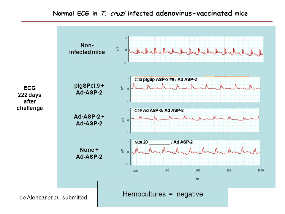 ECG 222 days after challenge Non- infected mice None + Ad-ASP-2 Ad-ASP-2 + Ad-ASP-2 pIgSPcl.9 + Ad-ASP-2 Hemocultures = negative Normal ECG in T.