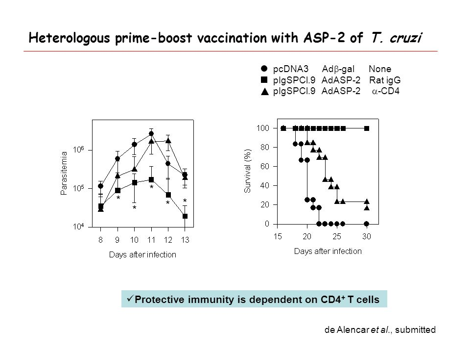 * * * * * pcDNA3 Ad  -gal None pIgSPCl.9 AdASP-2 Rat igG pIgSPCl.9 AdASP-2  -CD4 Protective immunity is dependent on CD4 + T cells de Alencar et al., submitted Heterologous prime-boost vaccination with ASP-2 of T.