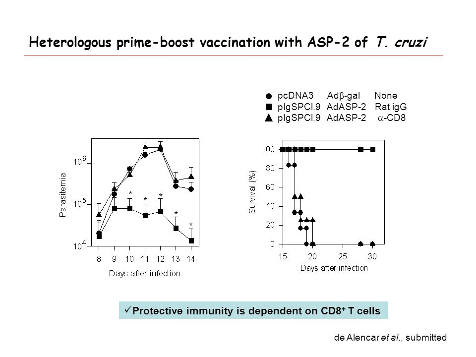 pcDNA3 Ad  -gal None pIgSPCl.9 AdASP-2 Rat igG pIgSPCl.9 AdASP-2  -CD8 * * * * * Protective immunity is dependent on CD8 + T cells Heterologous prime-boost vaccination with ASP-2 of T.