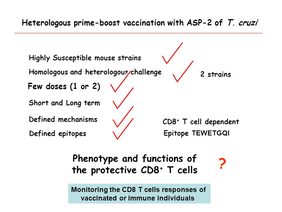Epitope TEWETGQI Homologous and heterologous challenge Defined mechanisms Highly Susceptible mouse strains Short and Long term Defined epitopes CD8 + T cell dependent 2 strains Few doses (1 or 2) Phenotype and functions of the protective CD8 + T cells .