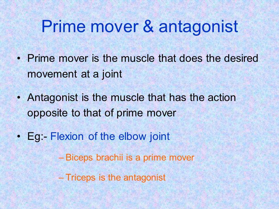 Prime mover & antagonist…