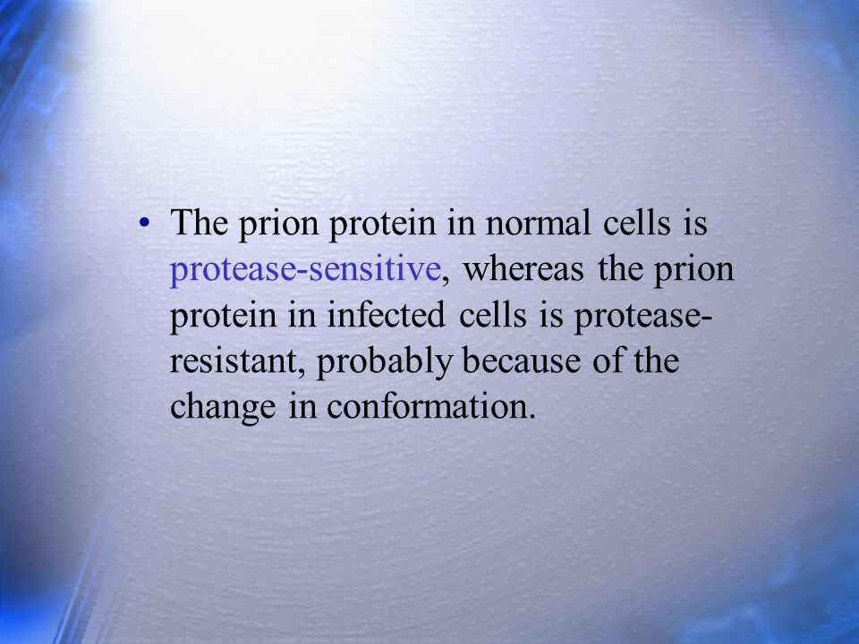 The prion protein in normal cells is protease-sensitive, whereas the prion protein in infected cells is protease- resistant, probably because of the c