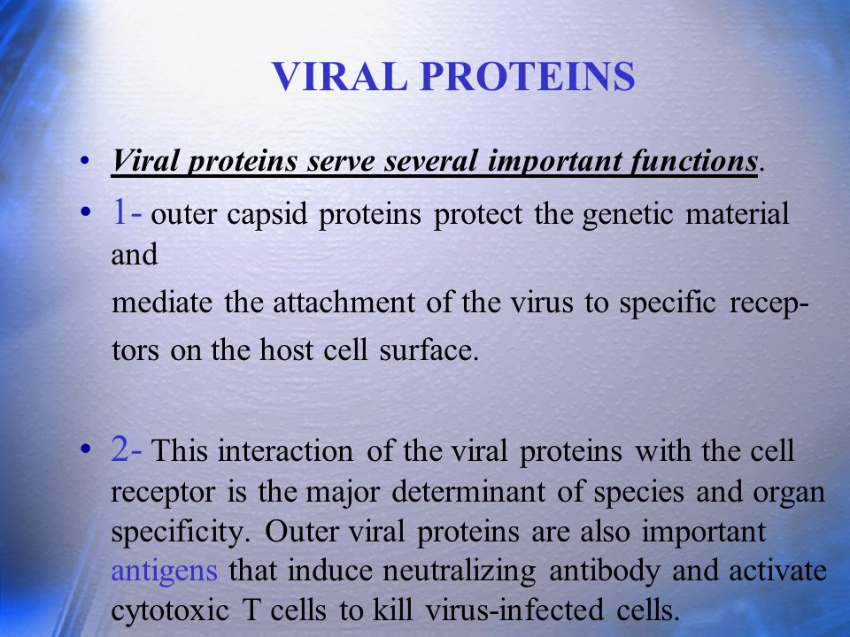 VIRAL PROTEINS Viral proteins serve several important functions. 1- outer capsid proteins protect the genetic material and mediate the attachment of t