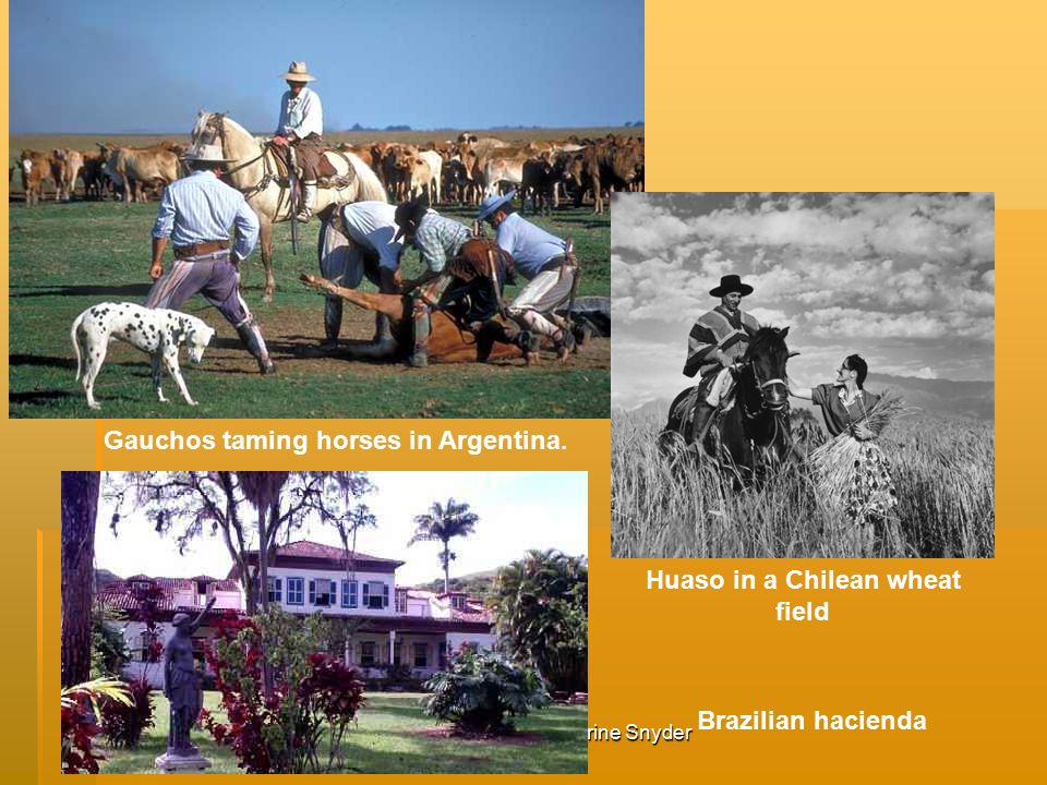 Created by Katherine Snyder Gauchos taming horses in Argentina.