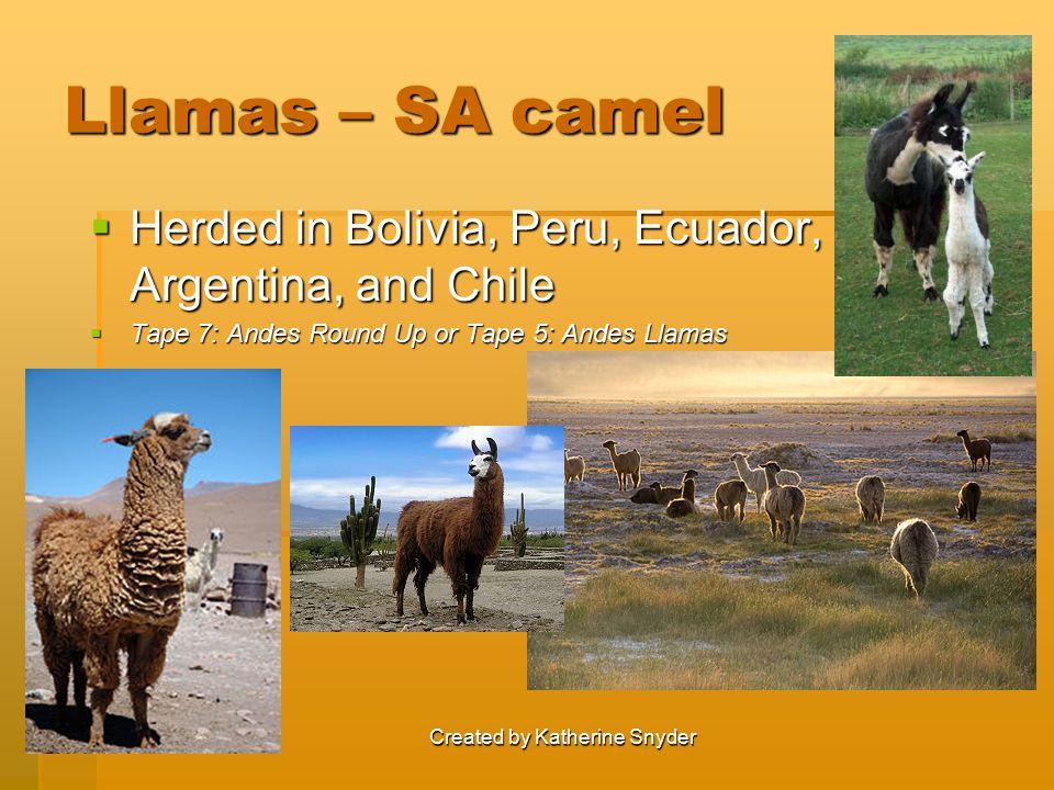 Llamas – SA camel  Herded in Bolivia, Peru, Ecuador, Argentina, and Chile  Tape 7: Andes Round Up or Tape 5: Andes Llamas