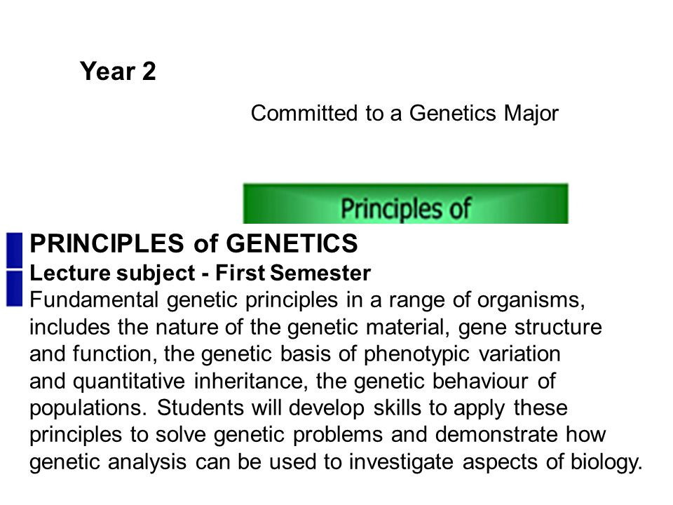 Year 2 Committed to a Genetics Major PRINCIPLES of GENETICS Lecture subject - First Semester Fundamental genetic principles in a range of organisms, i