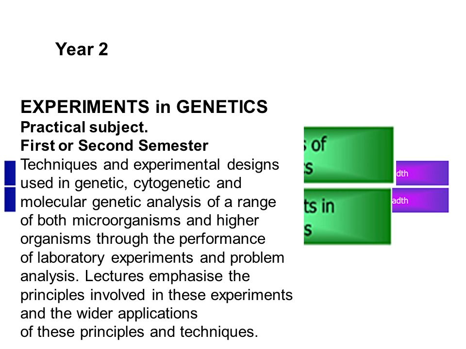 Year 2 EXPERIMENTS in GENETICS Practical subject. First or Second Semester Techniques and experimental designs used in genetic, cytogenetic and molecu