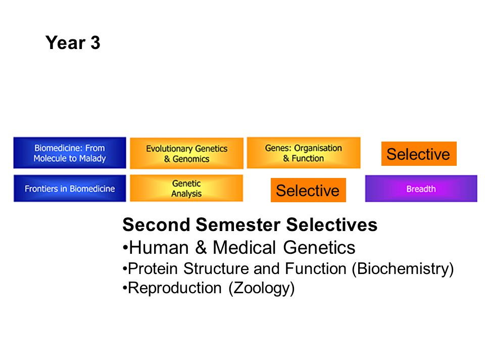 Selective Year 3 Second Semester Selectives Human & Medical Genetics Protein Structure and Function (Biochemistry) Reproduction (Zoology) Selective