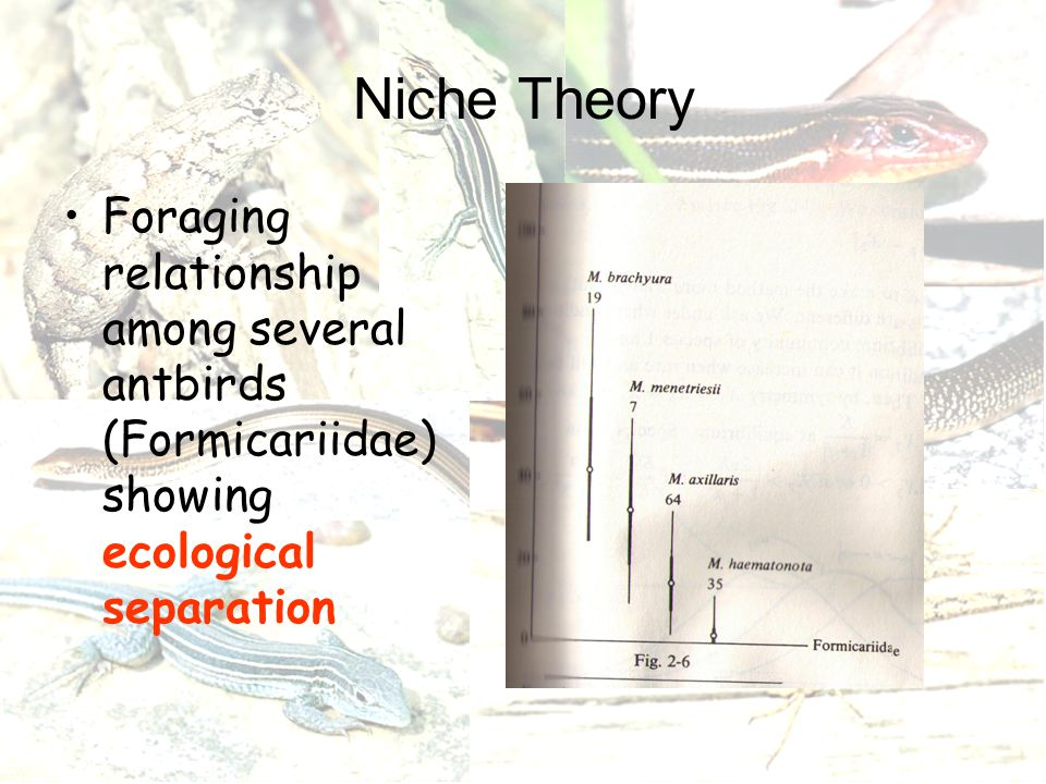 Niche Theory Foraging relationship among several antbirds (Formicariidae) showing ecological separation