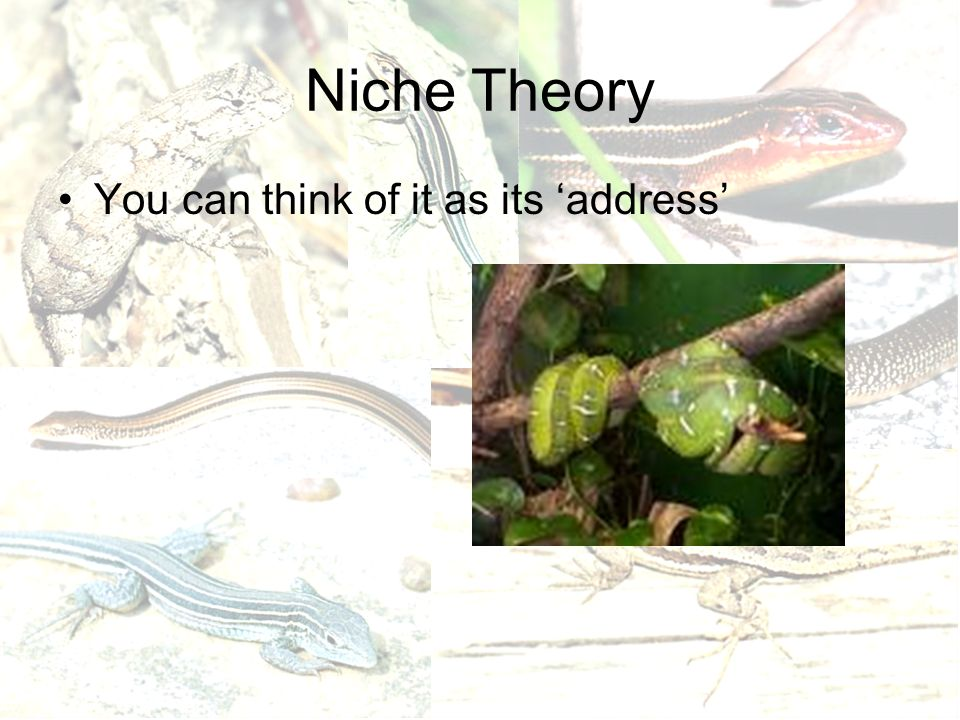 Niche Theory You can think of it as its 'address'