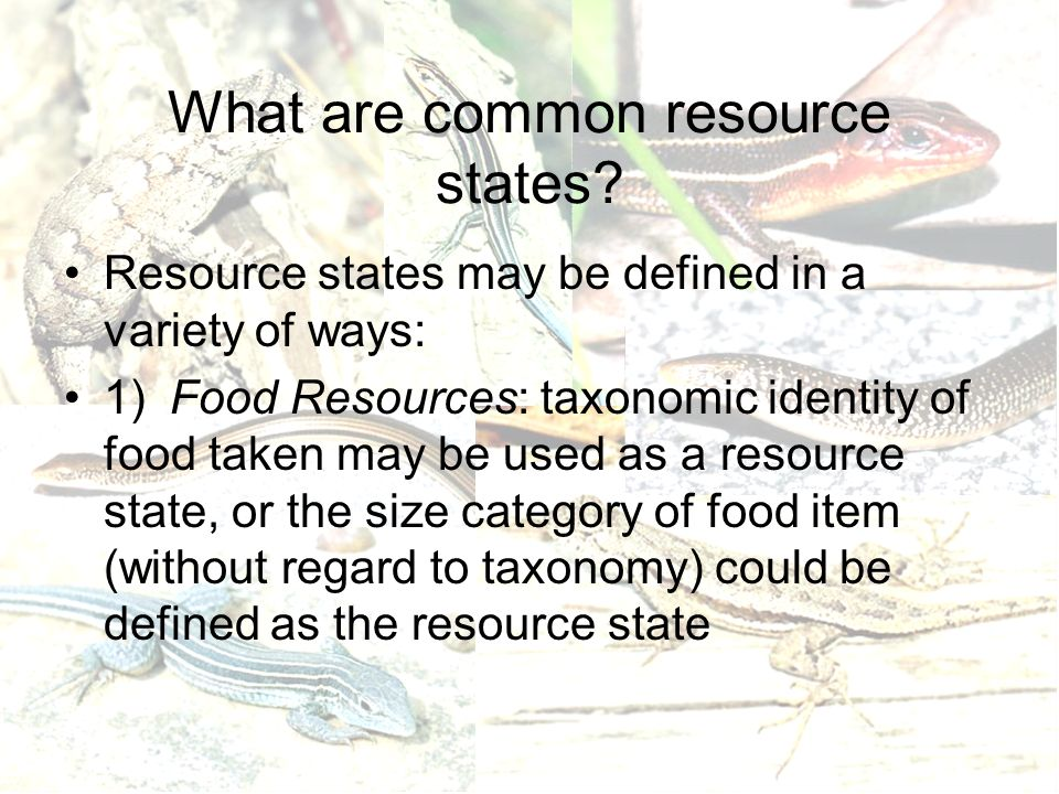 What are common resource states? Resource states may be defined in a variety of ways: 1)Food Resources: taxonomic identity of food taken may be used a