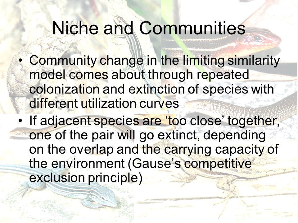 Niche and Communities Community change in the limiting similarity model comes about through repeated colonization and extinction of species with different utilization curves If adjacent species are 'too close' together, one of the pair will go extinct, depending on the overlap and the carrying capacity of the environment (Gause's competitive exclusion principle)