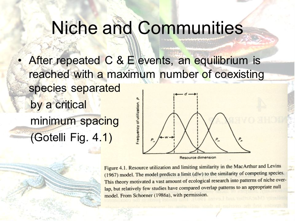 Niche and Communities After repeated C & E events, an equilibrium is reached with a maximum number of coexisting species separated by a critical minimum spacing (Gotelli Fig.