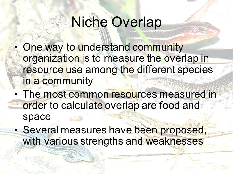 Niche Overlap One way to understand community organization is to measure the overlap in resource use among the different species in a community The most common resources measured in order to calculate overlap are food and space Several measures have been proposed, with various strengths and weaknesses
