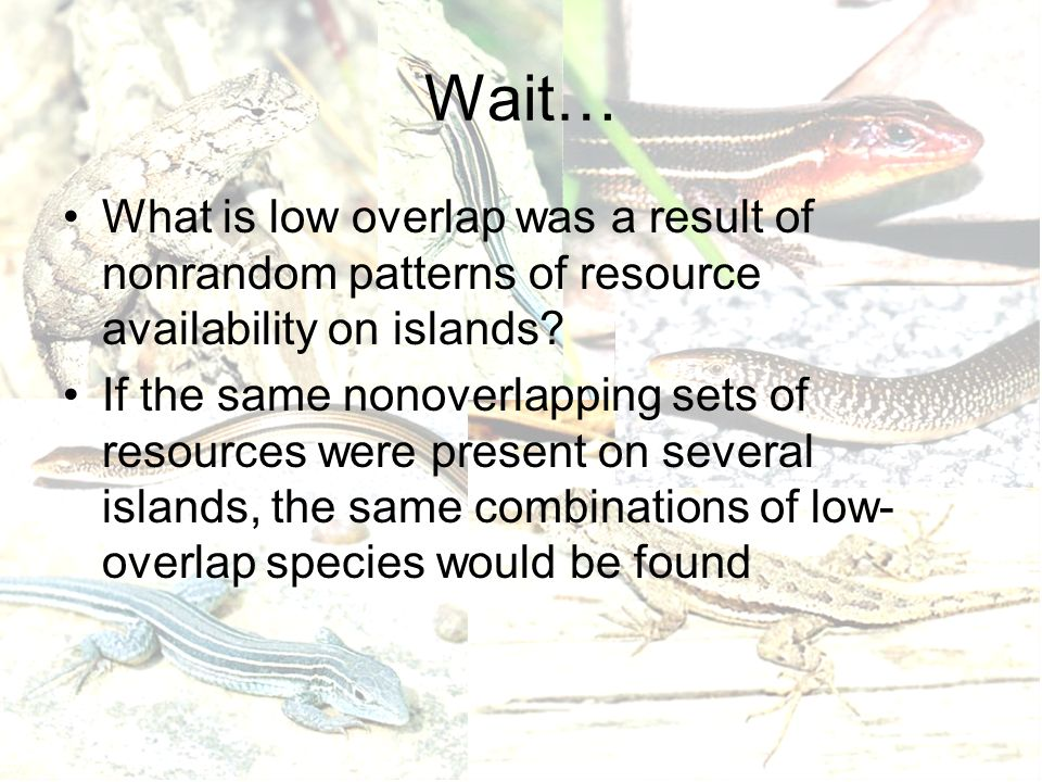 Wait… What is low overlap was a result of nonrandom patterns of resource availability on islands? If the same nonoverlapping sets of resources were pr