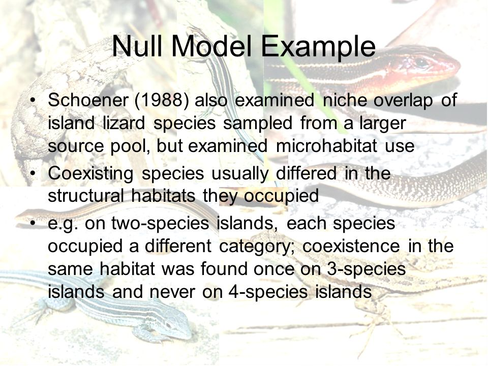 Null Model Example Schoener (1988) also examined niche overlap of island lizard species sampled from a larger source pool, but examined microhabitat use Coexisting species usually differed in the structural habitats they occupied e.g.