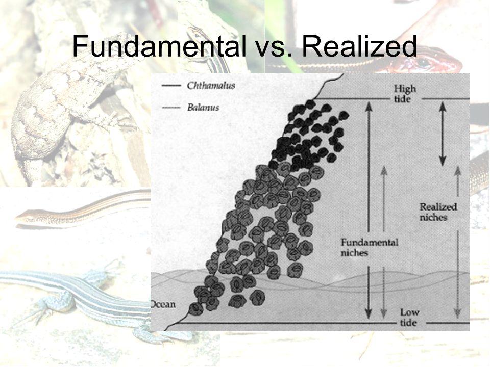 Fundamental vs. Realized