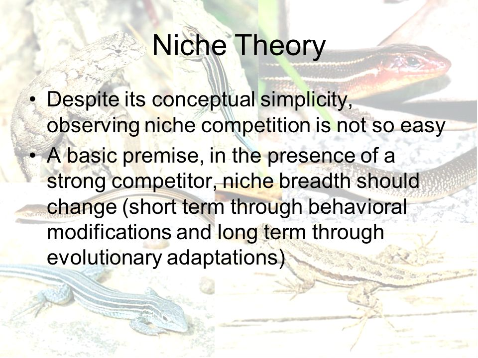 Niche Theory Despite its conceptual simplicity, observing niche competition is not so easy A basic premise, in the presence of a strong competitor, niche breadth should change (short term through behavioral modifications and long term through evolutionary adaptations)