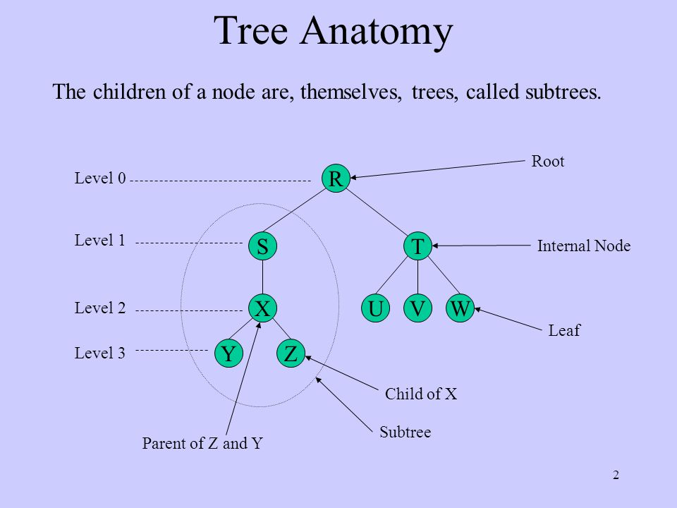 2 Tree Anatomy R S YZ X T UVW Root Internal Node Leaf Subtree Level 0 Level 1 Level 2 Level 3 Child of X Parent of Z and Y The children of a node are, themselves, trees, called subtrees.