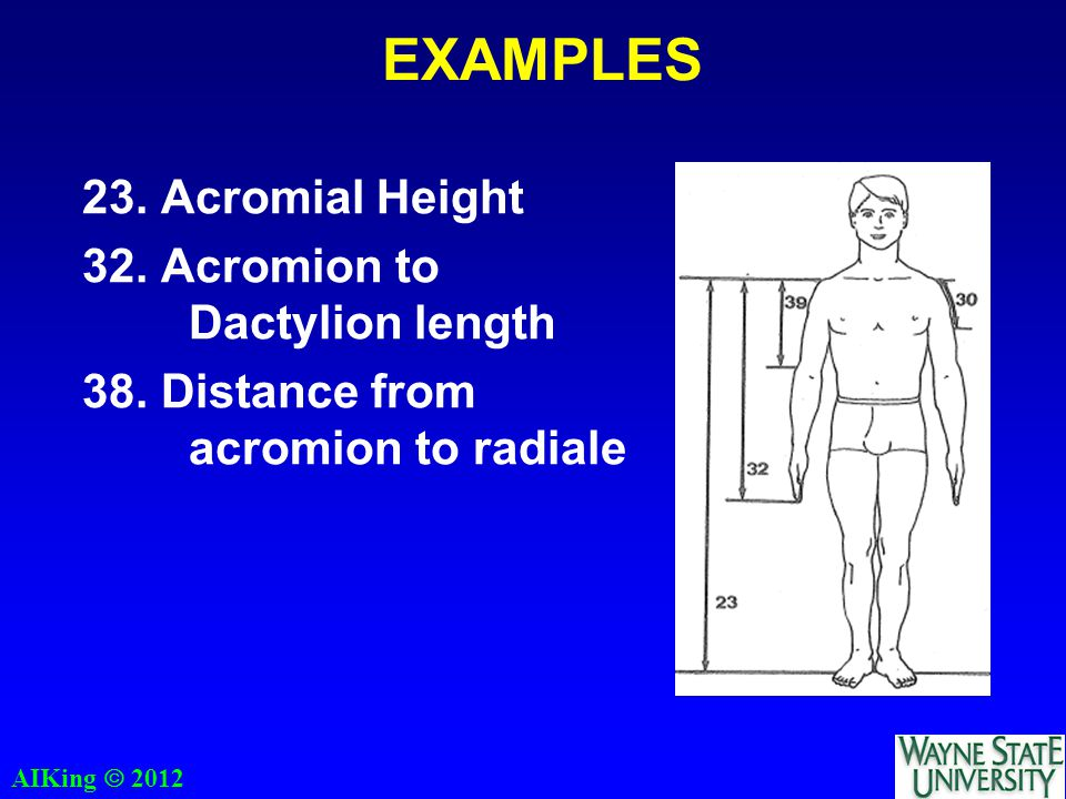 AIKing  2012 EXAMPLES 23. Acromial Height 32. Acromion to Dactylion length 38.