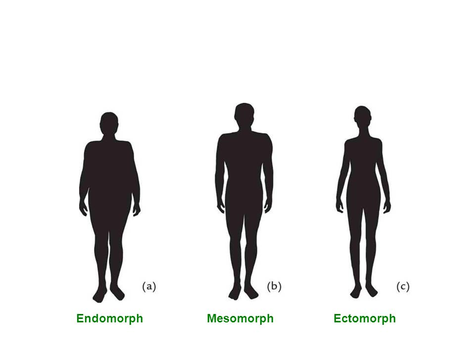 EndomorphMesomorphEctomorph