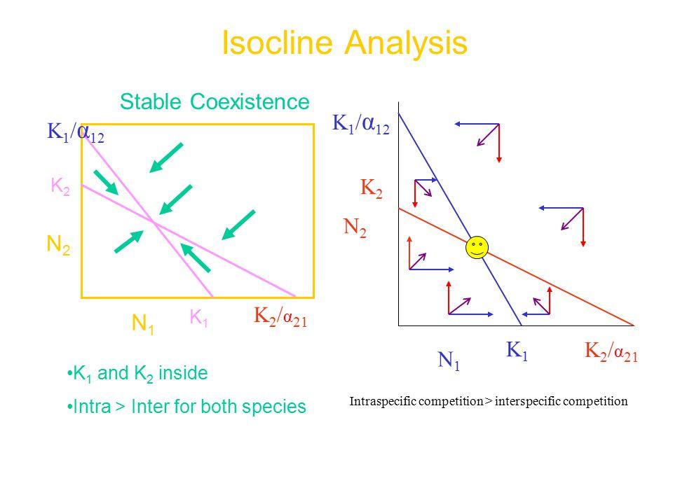 Isocline Analysis K 2 / α 21 N2N2 N1N1 K1K1 K2K2 Stable Coexistence K 1 and K 2 inside Intra > Inter for both species K 1 / α 12 K2K2 N2N2 K 2 / α 21