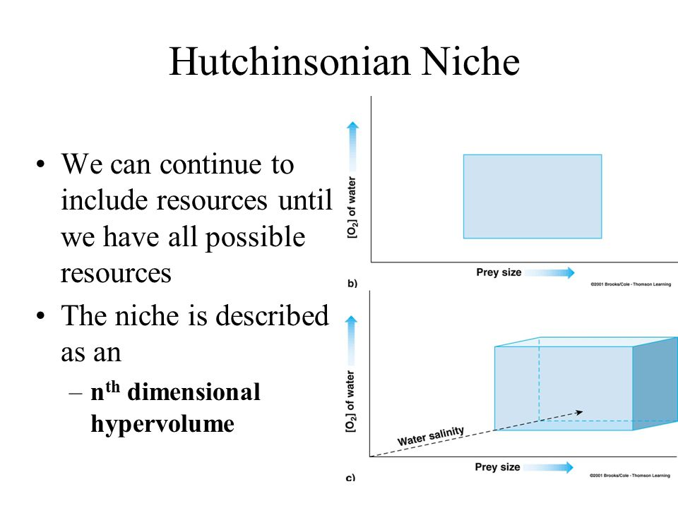 Hutchinsonian Niche We can continue to include resources until we have all possible resources The niche is described as an –n th dimensional hypervolume