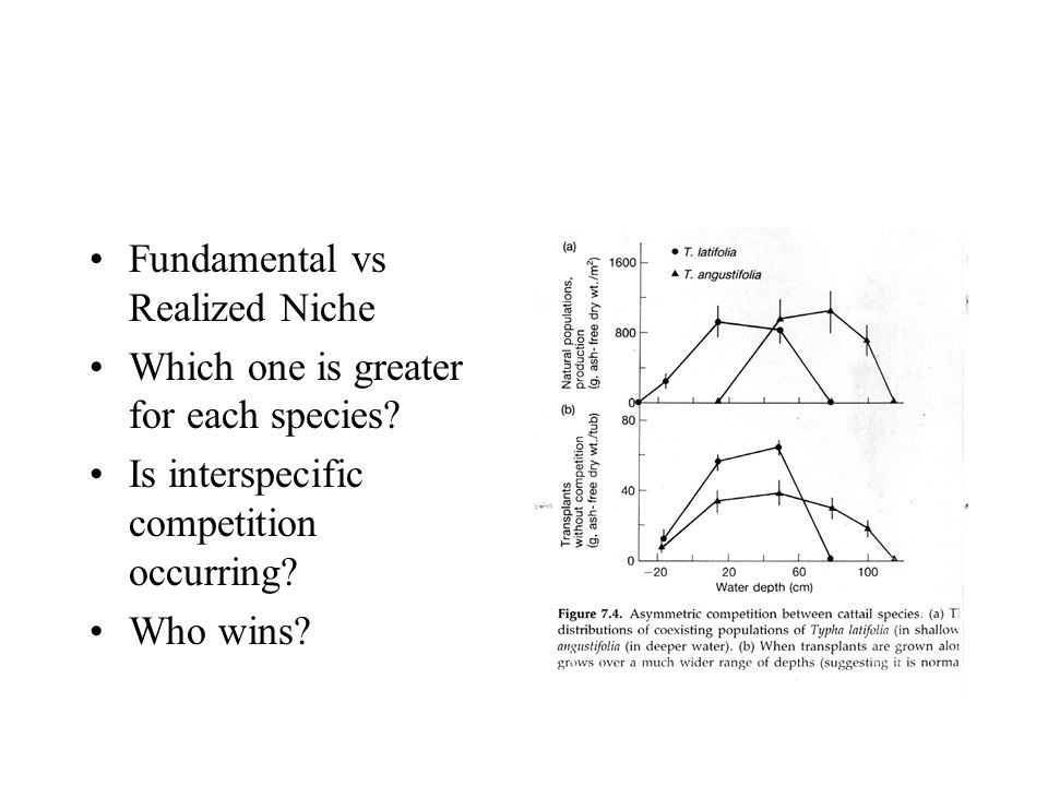 Fundamental vs Realized Niche Which one is greater for each species? Is interspecific competition occurring? Who wins?