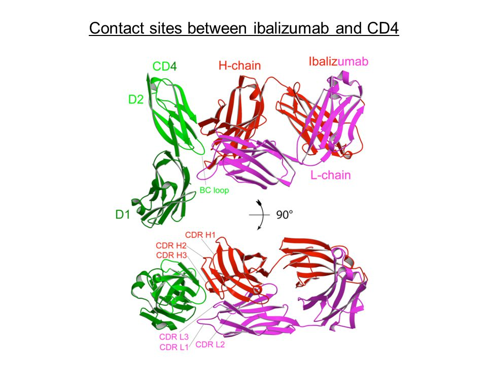 Contact sites between ibalizumab and CD4