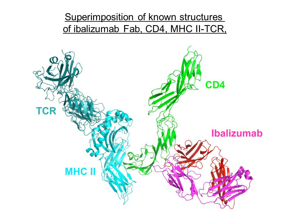 Superimposition of known structures of ibalizumab Fab, CD4, MHC II-TCR,