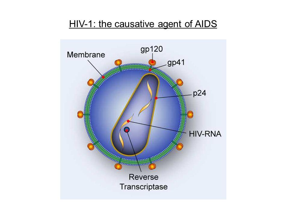 HIV-1 genomic organization