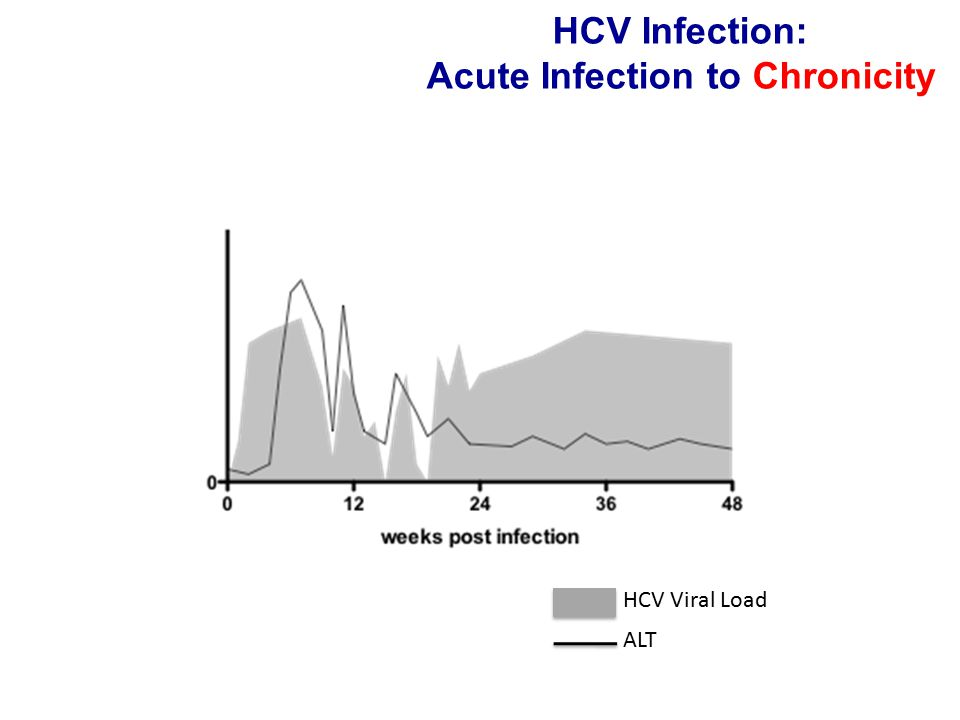 HCV-specific CD4+ T-cell responses Detectable in all subjects No correlation between early breadth/vigor and outcome Rapid contraction with viral persistence (in PBMC) Early functional defect (proliferation) associated with viral persistence In persistent infection affected earlier and more profoundly compared to CD8 responses New technologies allow analysis of early T cell responses in HCV – dichotomous outcome makes HCV unique model to define protective immunity