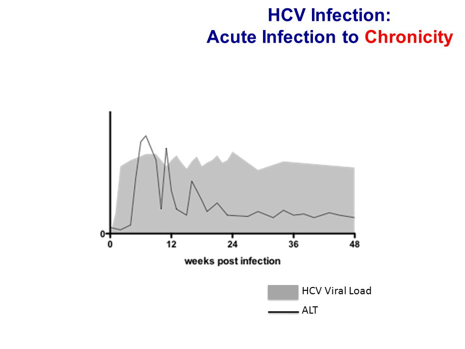 HCV Infection: Acute Infection to Chronicity HCV Viral Load ALT