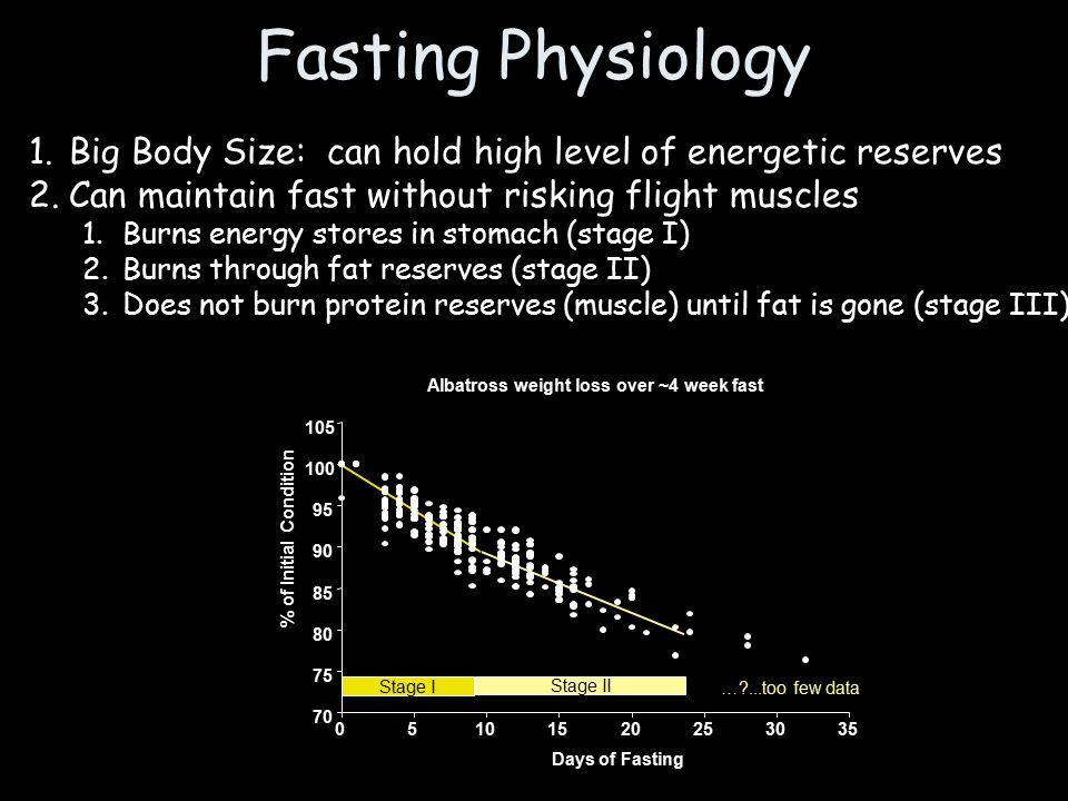 Fasting Physiology 1.Big Body Size: can hold high level of energetic reserves 2.Can maintain fast without risking flight muscles 1.Burns energy stores in stomach (stage I) 2.Burns through fat reserves (stage II) 3.Does not burn protein reserves (muscle) until fat is gone (stage III) Stage I Stage II … ...too few data