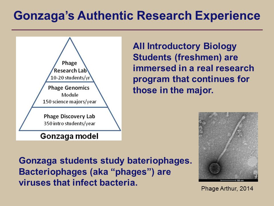 Gonzaga's Authentic Research Experience Gonzaga students study bateriophages.