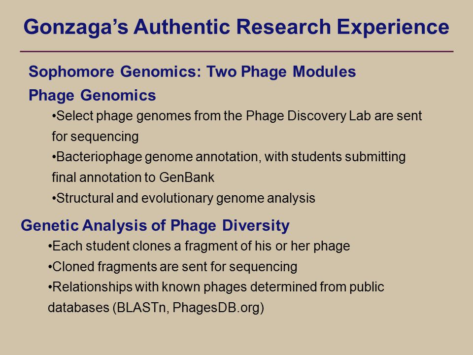 Gonzaga's Authentic Research Experience Sophomore Genomics: Two Phage Modules Select phage genomes from the Phage Discovery Lab are sent for sequencing Bacteriophage genome annotation, with students submitting final annotation to GenBank Structural and evolutionary genome analysis Phage Genomics Genetic Analysis of Phage Diversity Each student clones a fragment of his or her phage Cloned fragments are sent for sequencing Relationships with known phages determined from public databases (BLASTn, PhagesDB.org)