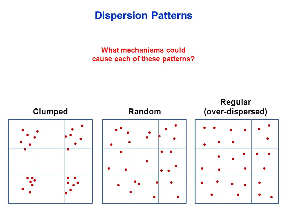 Clumped Dispersion Patterns What mechanisms could cause each of these patterns? Random Regular (over-dispersed)