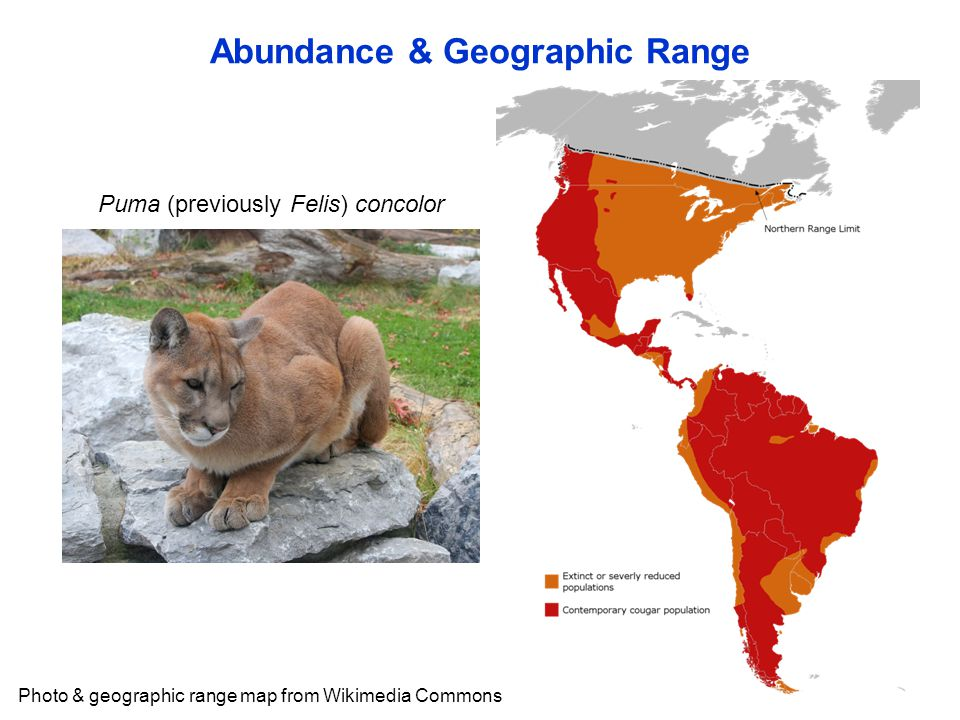 Abundance & Geographic Range Photo & geographic range map from Wikimedia Commons Puma (previously Felis) concolor