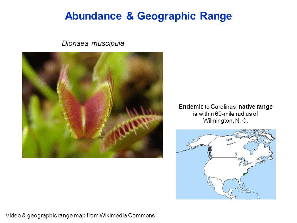 Abundance & Geographic Range Video & geographic range map from Wikimedia Commons Dionaea muscipula Endemic to Carolinas; native range is within 60-mile radius of Wilmington, N.