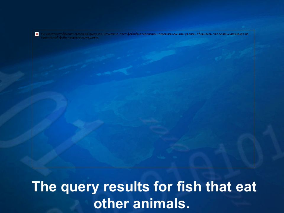 The query results for fish that eat other animals.