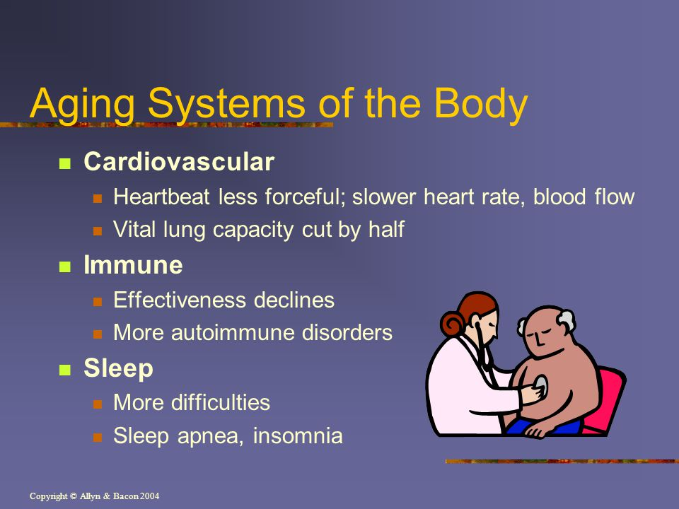 Copyright © Allyn & Bacon 2004 Aging Systems of the Body Cardiovascular Heartbeat less forceful; slower heart rate, blood flow Vital lung capacity cut
