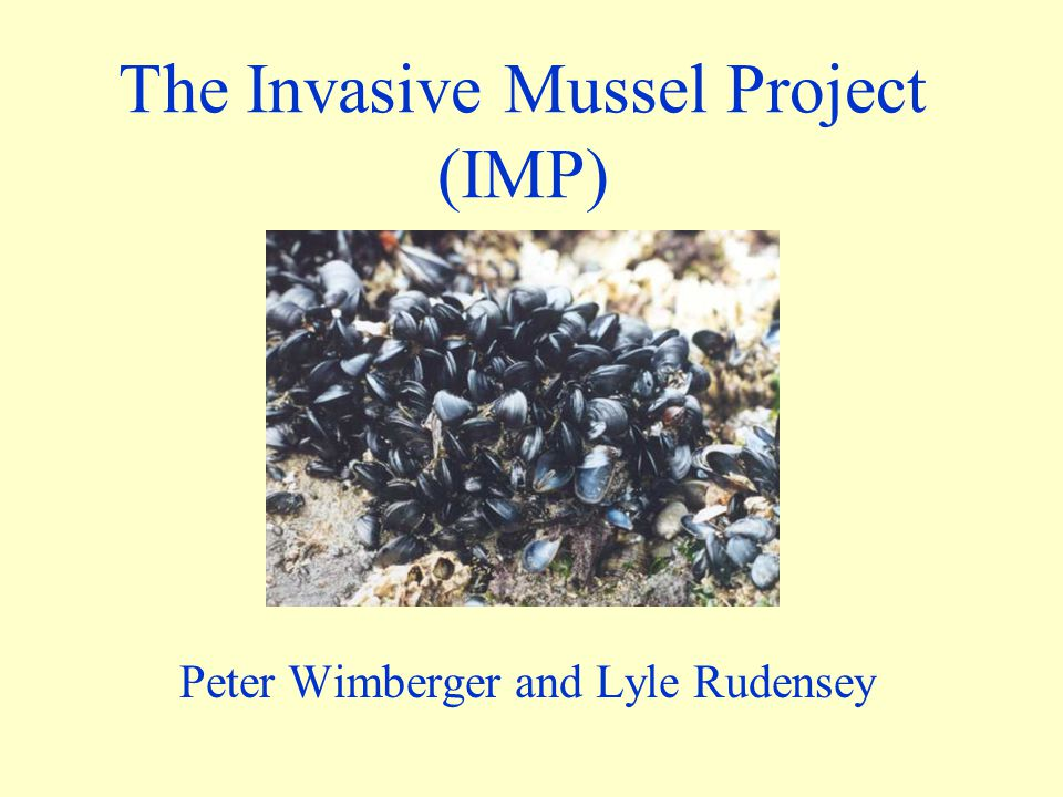 The Invasive Mussel Project (IMP) Peter Wimberger and Lyle Rudensey