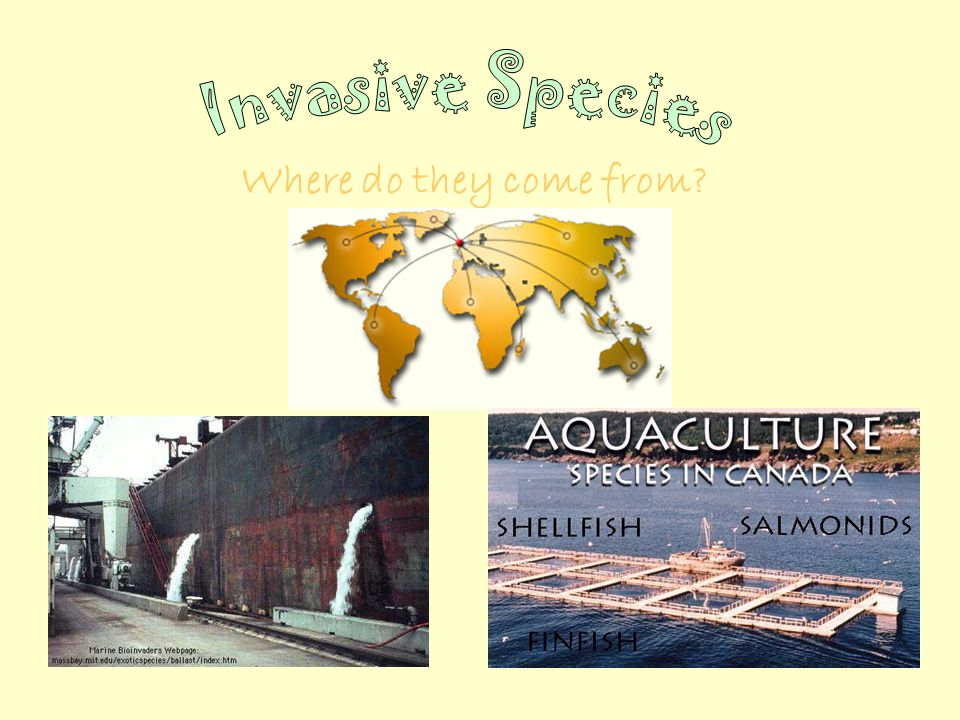 Where do they come from Shipping – ballast waterAquaculture