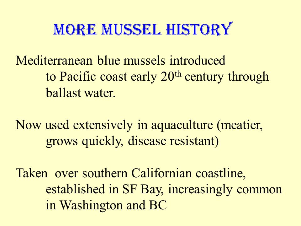 Mediterranean blue mussels introduced to Pacific coast early 20 th century through ballast water.