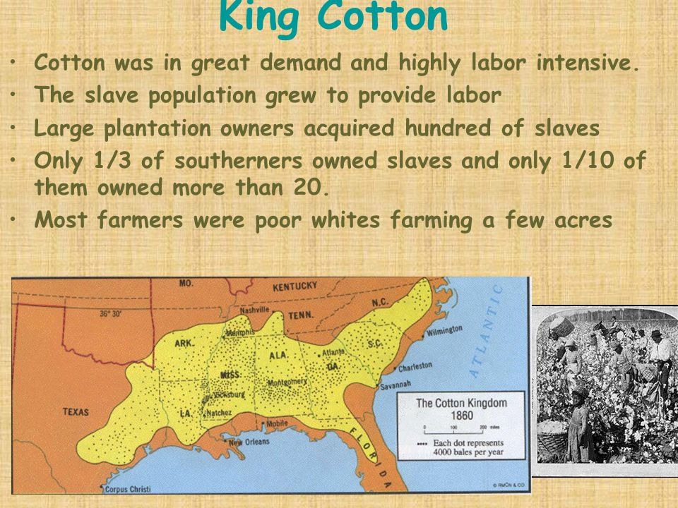King Cotton Cotton was in great demand and highly labor intensive. The slave population grew to provide labor Large plantation owners acquired hundred