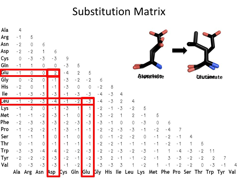Substitution Matrix Glutamate Aspartate Glutamate Leucine