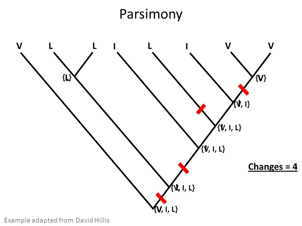 Parsimony V V V I L L Example adapted from David Hillis I L {V} {L} {V, I} {V, I, L} Changes = 4 V L I I I V L